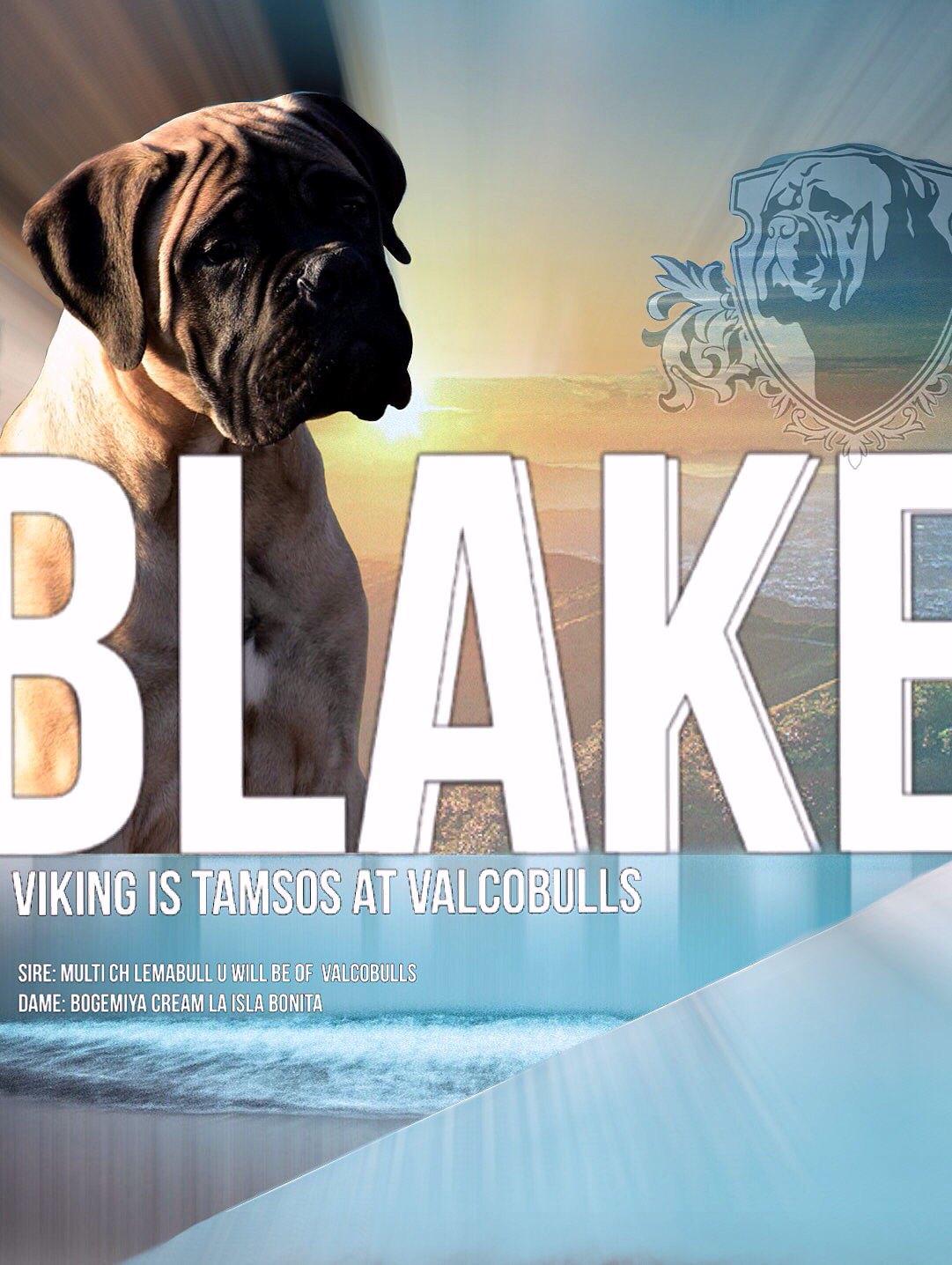 Viking is TAMSOS at Valcobulls