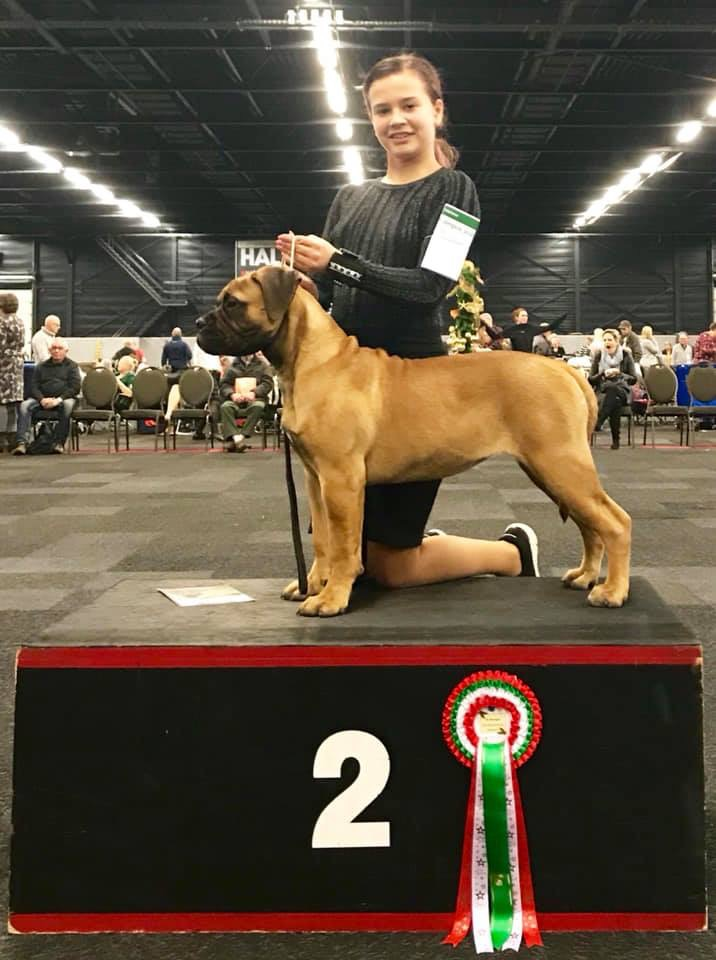 Valcobulls Reasonable doubt BEST IN SHOW AT THE AMSTERDAM WINNER