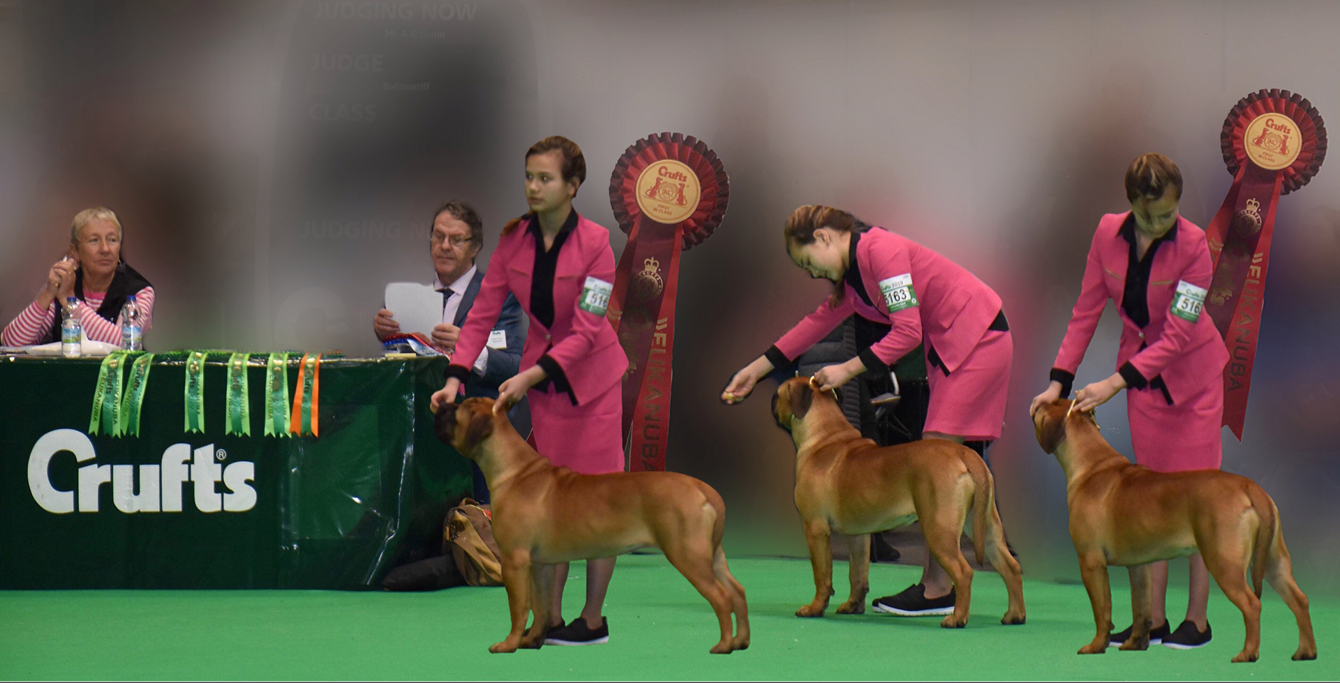 Valcobulls reasonable doubt best female minor pup best female pup crufts 2019