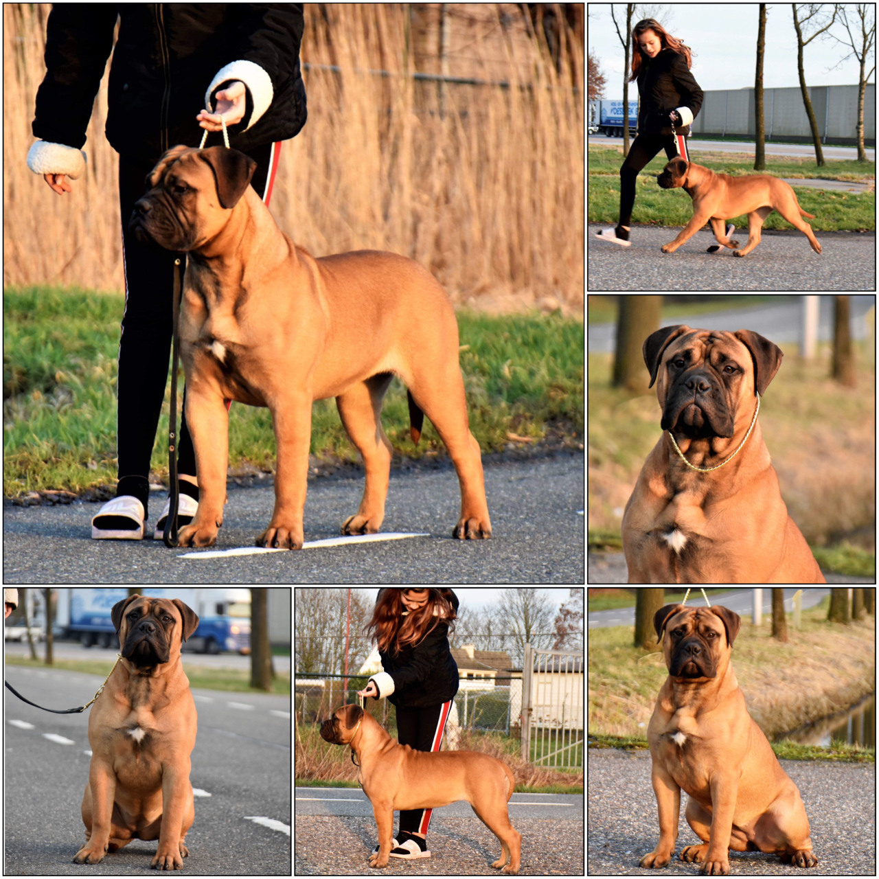 Valcobulls reasonable doubt best puppy in breed