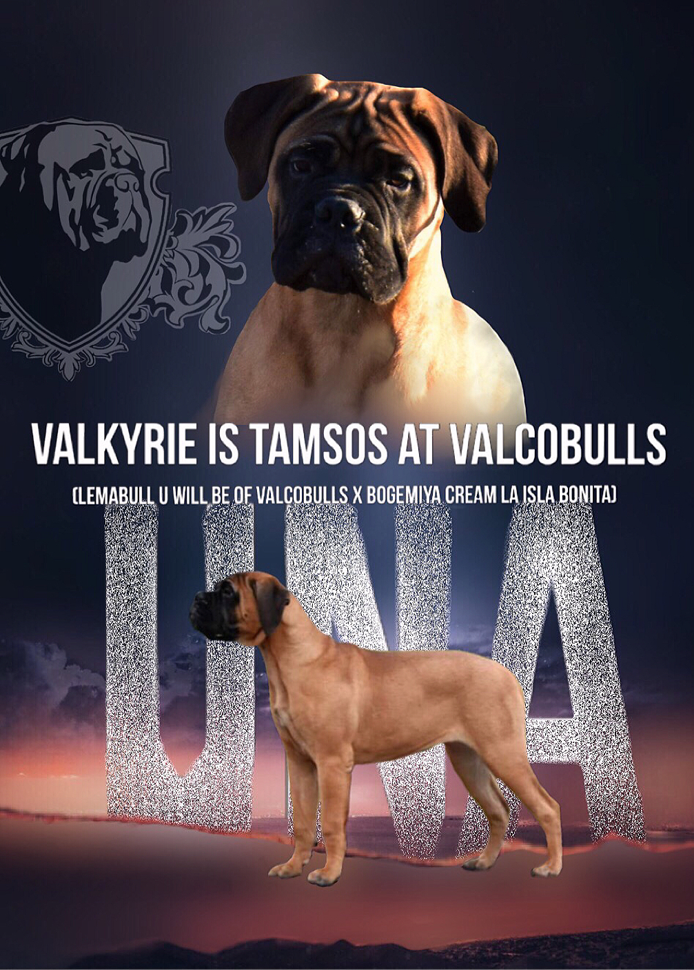 Valkyrie is Tamsos at Valcobulls