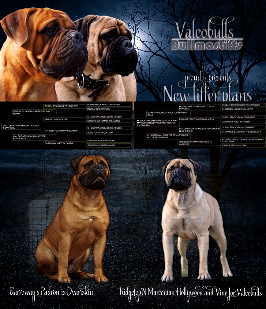 Ridgetop Marconian Hollywood and Vine for Valcobulls