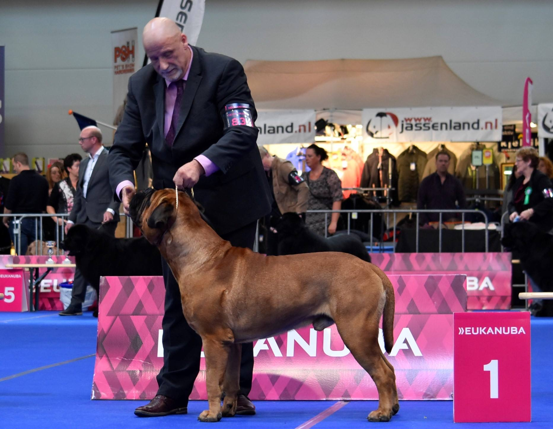 Lemabull u Will be of Valcobulls best of breed IDS Maastricht