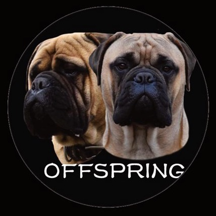 offspring valcobulls bullmastiff