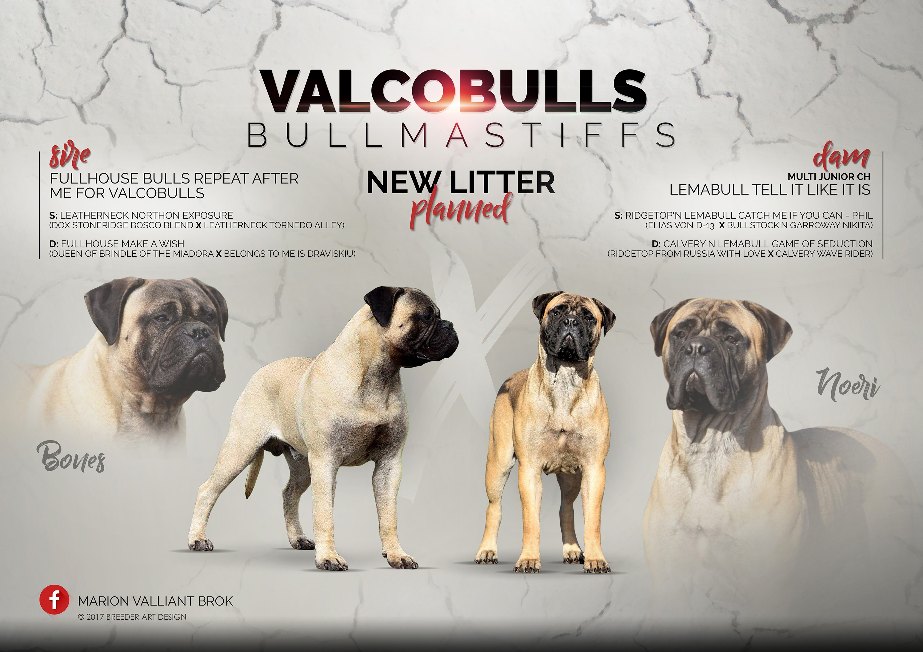 Fullhouse Bulls Repeat after me for Valcobulls x Lemabull tell iT like iT is bullmastiff puppy planning