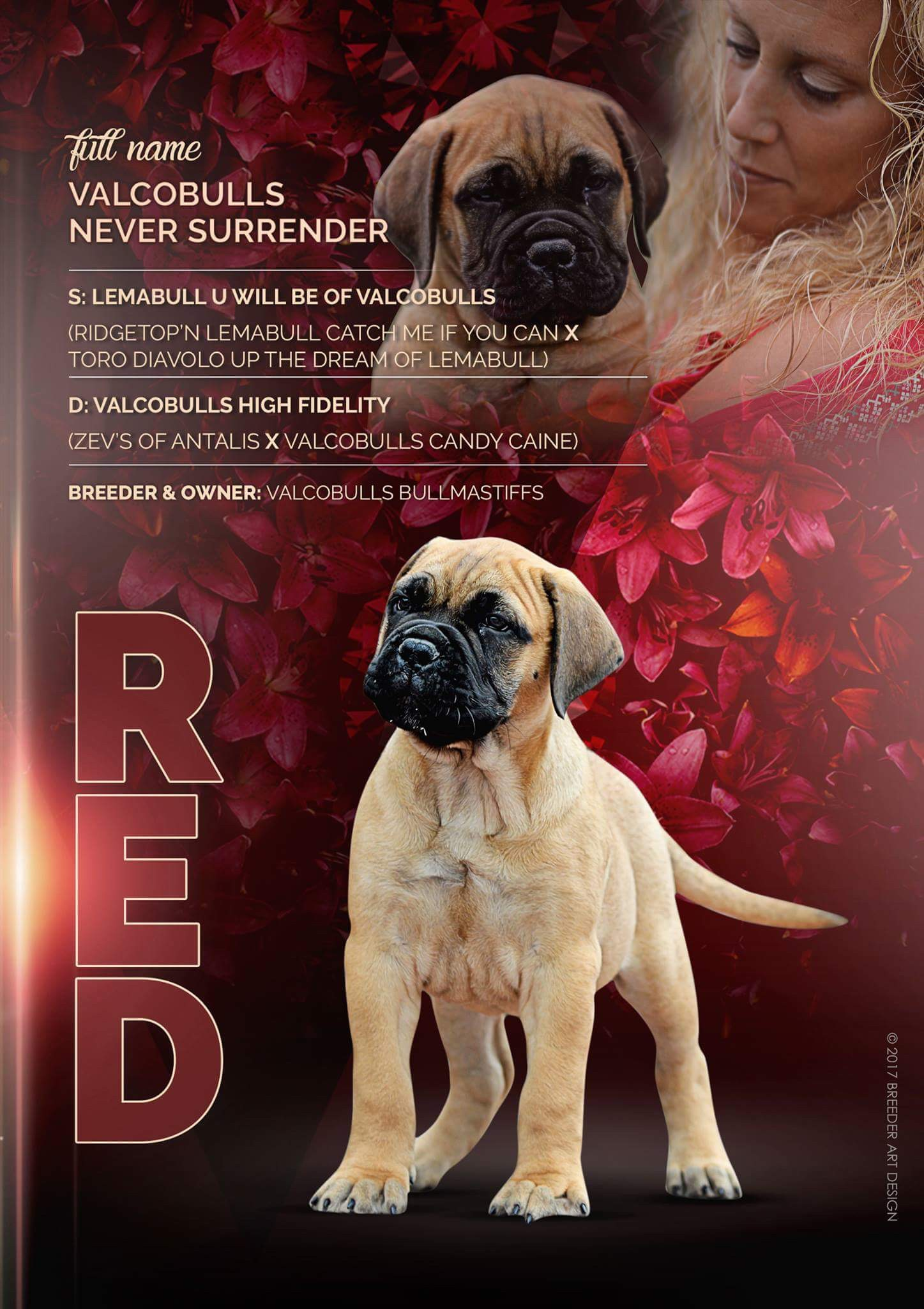 Valcobulls never surrender Bullmastiff